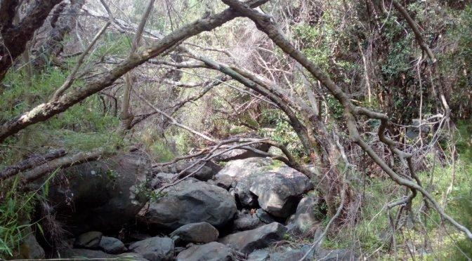 Kordyliera Nadbrzeżna. Parque Nacional la Campana